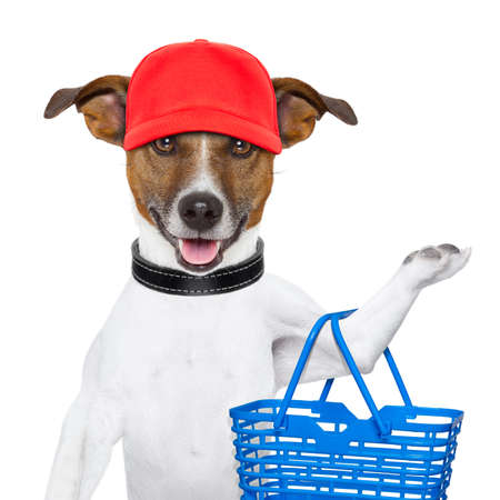 shopping basket: dog with a shopping basket and a red cap