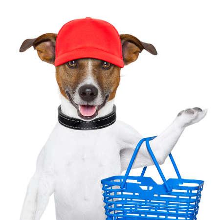 compras: perro con una cesta de la compra y una gorra roja