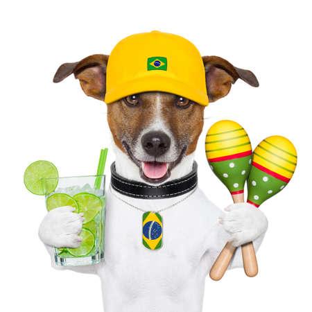 coctel de frutas: perro divertido brasile�a con agitadores caipirinha y sonajero Foto de archivo