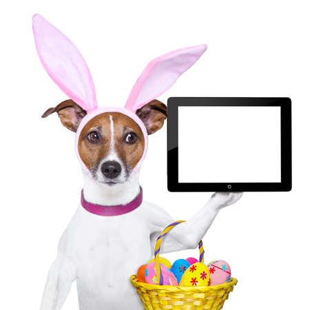 dog dressed up as bunny with easter basket holding a tablet pc