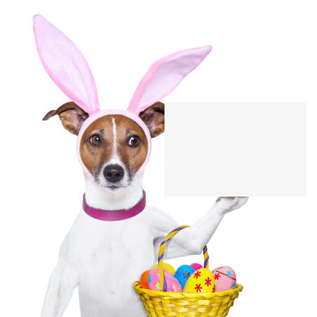 dog dressed up as bunny with easter basket and a banner photo