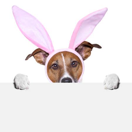 perros vestidos: Pascua perro con orejas de conejo que sostienen una pancarta por detr�s Foto de archivo
