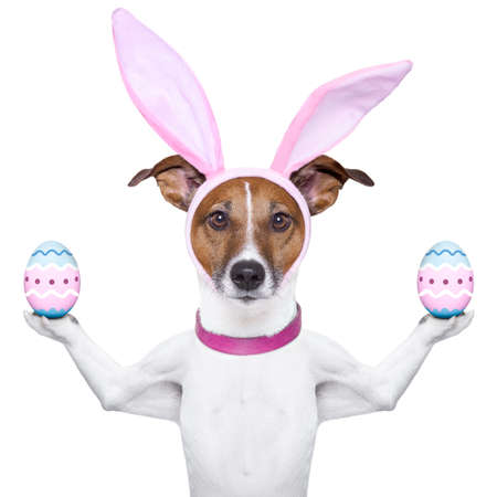 jack rabbit: dog with bunny ears  balancing two easter eggs
