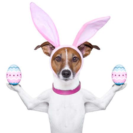 bunny ears: perro con orejas de conejo equilibrar dos huevos de Pascua Foto de archivo