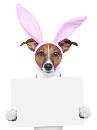 Ostern Hund mit Hasenohren halten ein Plakat Standard-Bild