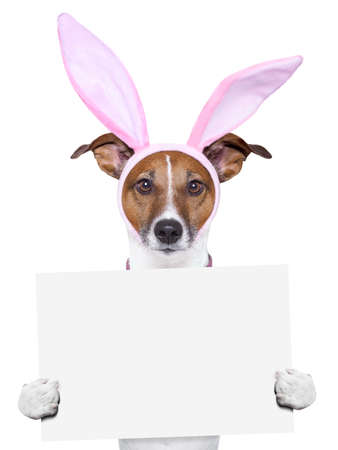 perros vestidos: Pascua perro con orejas de conejo sosteniendo un cartel