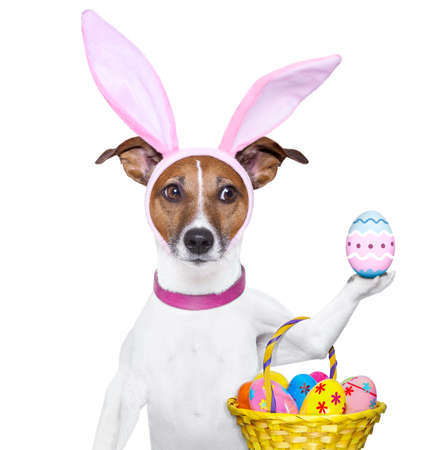 ostern lustig: Hund gekleidet als Osterhase mit Ostern Korb