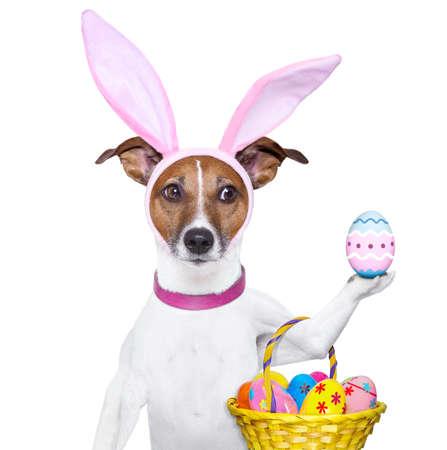 perros vestidos: perro disfrazado de conejito con la cesta de Pascua