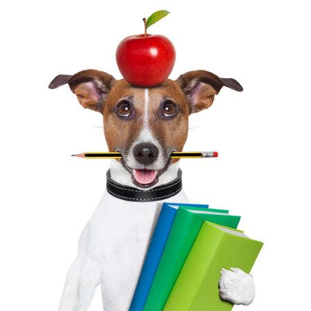 Hunden går till skolan med böcker penna och äpple Stockfoto