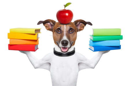 dog going to school balancing books and apple Stock Photo