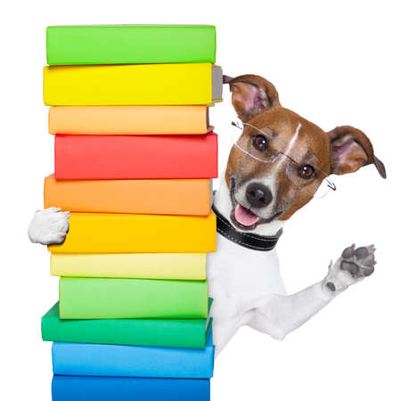 dog behind a tall stack of books photo