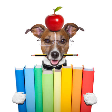 dog holding a big stack of books