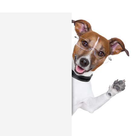 dog  with glasses behind a white banner waving photo