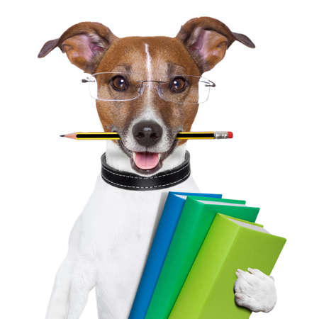 dog school: school dog with books and a pencil Stock Photo