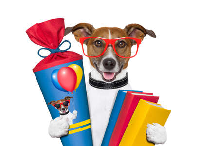 school dog with books and school cone Stock Photo - 18546051