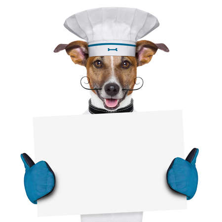 a cook dog holding an empty placard