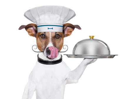 show dog: cook dog holding a serving tray with cover