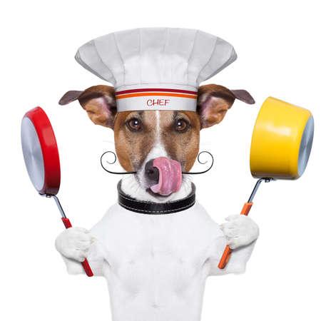 aliments droles: chien tenant un pot color� et une casserole Banque d'images