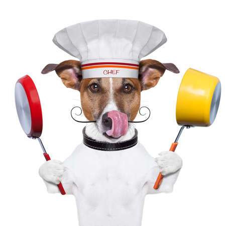 funny dogs: dog holding colorful a pot and  a pan Stock Photo