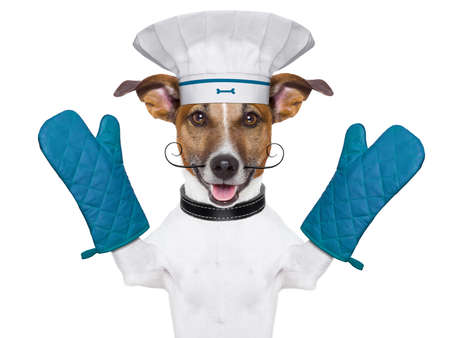 chefs show: a cook chef dog with oven mitts