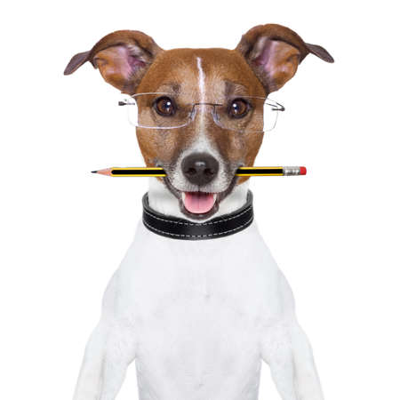 science text: dog with pencil in mouth and glasses Stock Photo