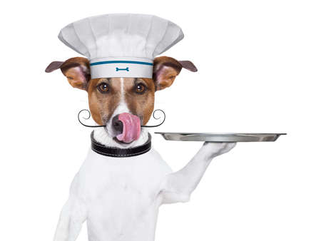 trays: cook dog holding a serving tray with cover