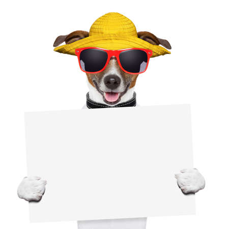 funny summer dog holding a blank banner