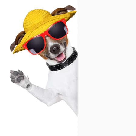 dog summer: funny summer dog behind a blank banner