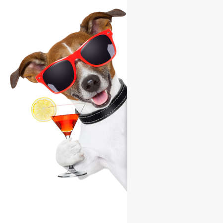 funny cocktail dog holding a martini glass behind a banner photo