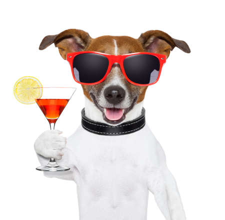 congratulation: funny cocktail dog holding a martini glass