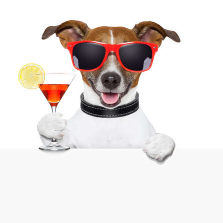 funny cocktail dog behind a white banner photo
