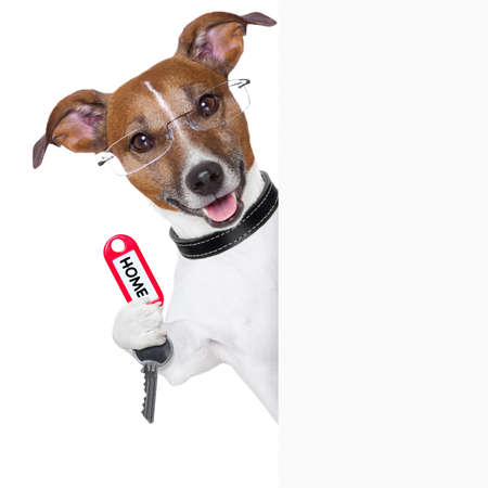 dog behind an empty placard with a home  key Stock Photo - 18952077