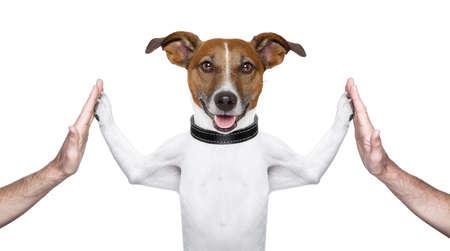 perros vestidos: perro dando de alta cinco en ambos lados con las manos masculinas