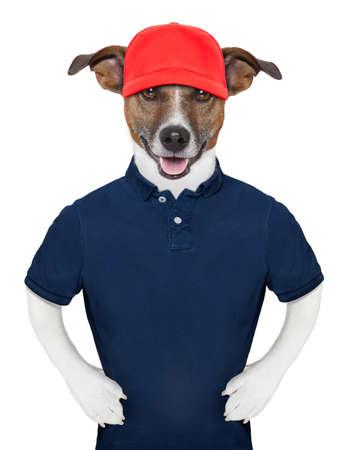 perros vestidos: Servicio perro que llevaba un polo azul y una gorra roja Foto de archivo