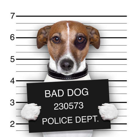 criminals: mugshot of  wanted dog holding a banner