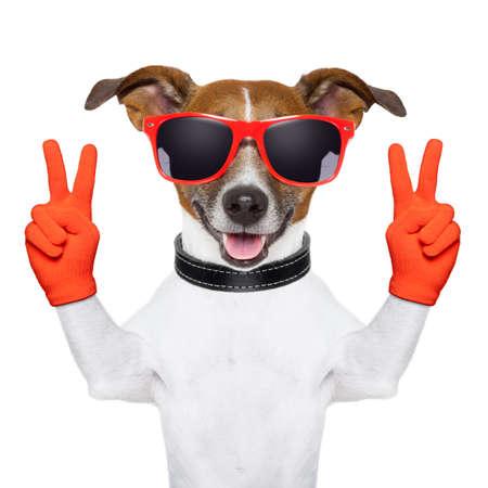 simbolo della pace: la pace e la vittoria dita cane con i guanti rossi e occhiali Archivio Fotografico