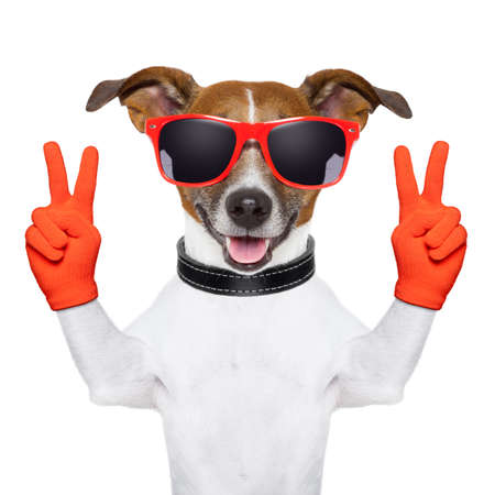 two animals: peace and victory fingers dog with red gloves and glasses Stock Photo