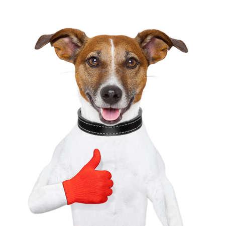 Ik hou hond met een duim omhoog