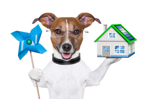jack russell terrier: eco green energy dog with mill and house