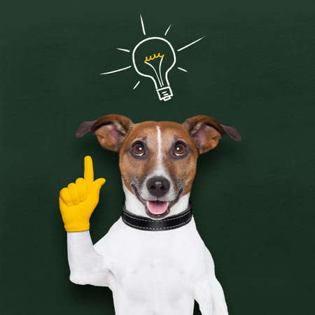 lightbulb idea: smart and clever dog with a light bulb on blackboard Stock Photo