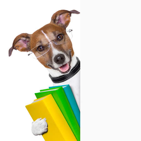 grappige honden: scholen hond met boeken en banner Stockfoto
