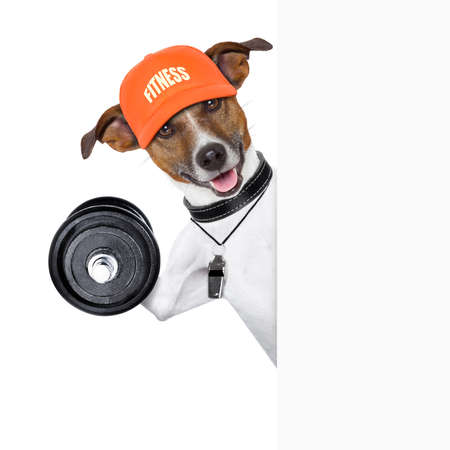 terriers: personal  trainer dog with dumbbell behind banner