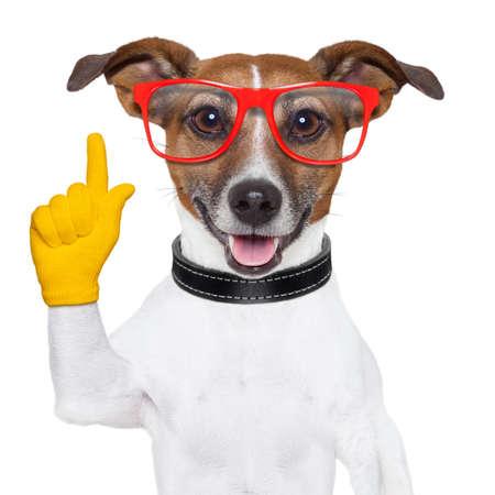 흰색에 고립 된 스마트하고 영리한 개