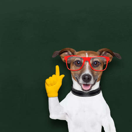 clever: smart and clever dog and  blackboard