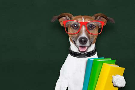 occhiali da vista: cane intelligente e intelligente con libri e bicchieri