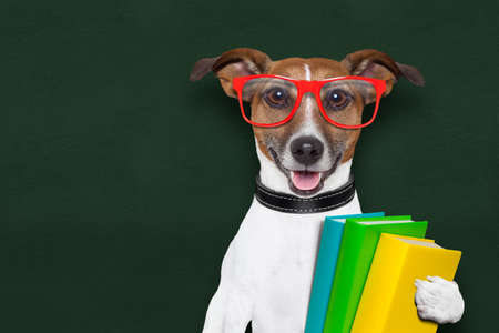 funny glasses: smart and clever dog with books and glasses Stock Photo