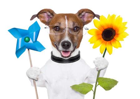 eco green energy Hund mit Windmühle und Sonnenblumen Standard-Bild