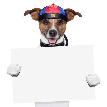 asian dog with chopsticks and asia hat behind banner Stock Photo - 19294020