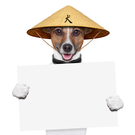 asian dog with chopsticks and asia hat behind banner Stock Photo - 19294019