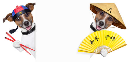 two asian dogs with chopsticks and asia hat behind banner Stock Photo - 19294024